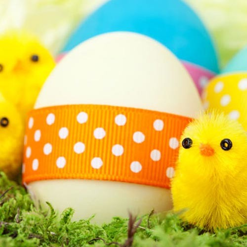 Easterchicks500x500